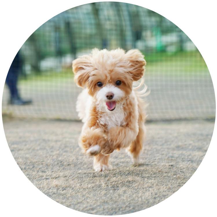 犬猫のフローリング滑り防止