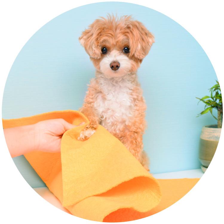 ペット用タオルで足拭き
