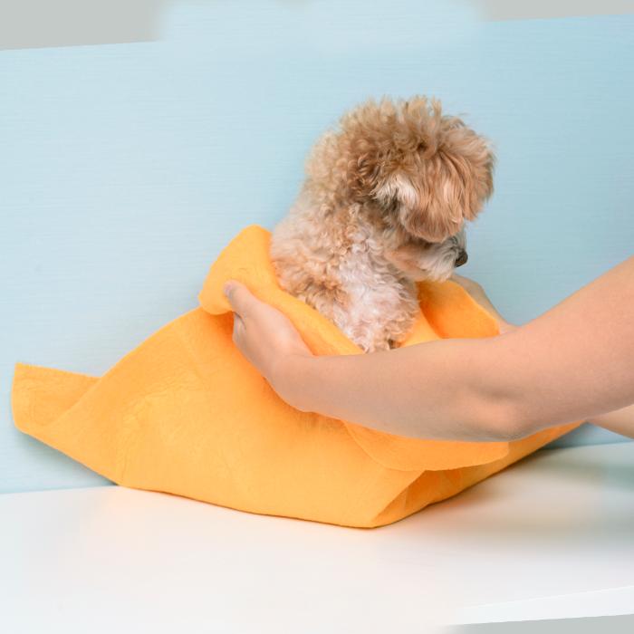 3kg犬使用例