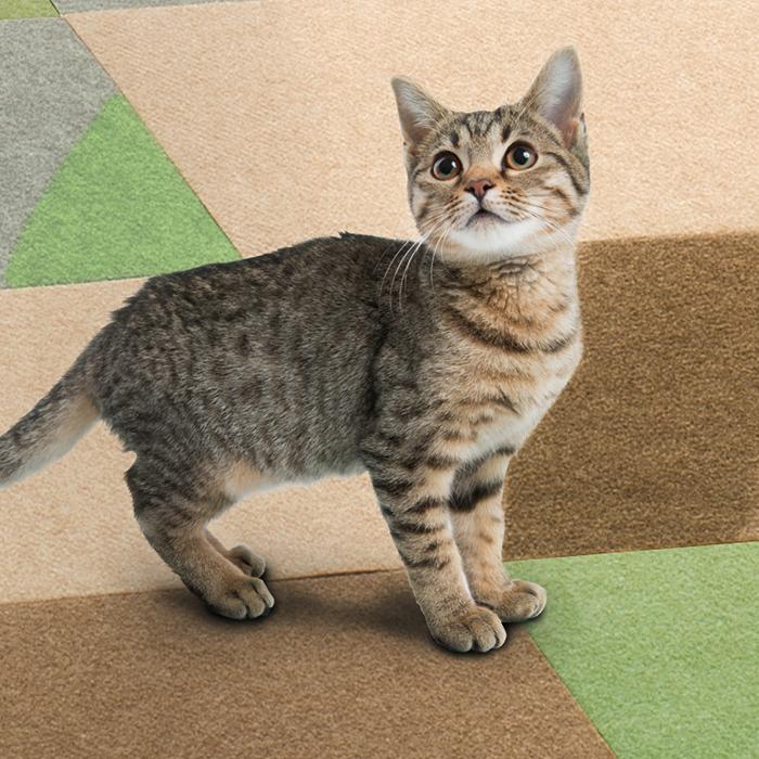 猫用キズ防止防音マット
